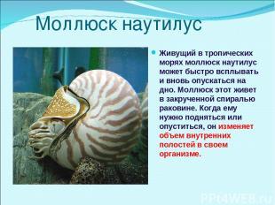 Моллюск наутилус Живущий в тропических морях моллюск наутилус может быстро всплы