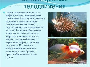Волнообразные телодвижения Рыбьи плавники усиливают этот эффект, но предназначен