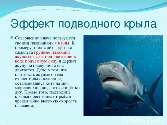 Эффект подводного крыла Совершенно иначе пользуются своими плавниками акулы. К примеру, похожие на крылья самолёта грудные плавники акулы создают при движении в воде подъёмную силу и держат акулу на плаву, пока она двигается. Дело в том, что плотнос…