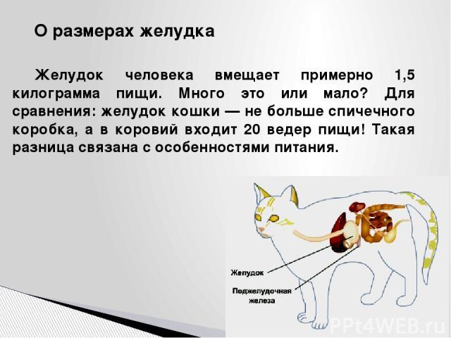 О размерах желудка Желудок человека вмещает примерно 1,5 килограмма пищи. Много это или мало? Для сравнения: желудок кошки — не больше спичечного коробка, а в коровий входит 20 ведер пищи! Такая разница связана с особенностями питания.