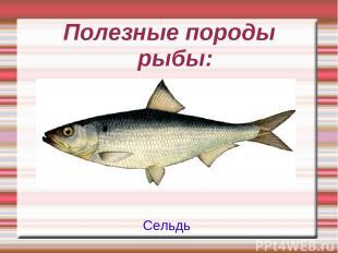 Полезные породы рыбы: Сельдь