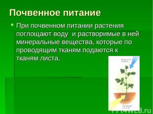 Почвенное питание При почвенном питании растения поглощают воду и растворимые в
