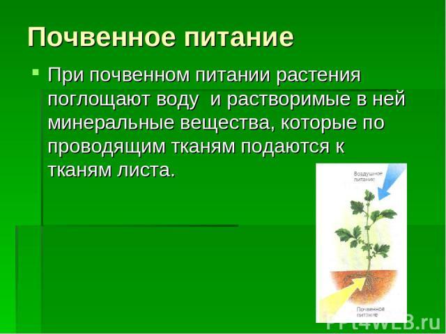 Почвенное питание При почвенном питании растения поглощают воду и растворимые в ней минеральные вещества, которые по проводящим тканям подаются к тканям листа.