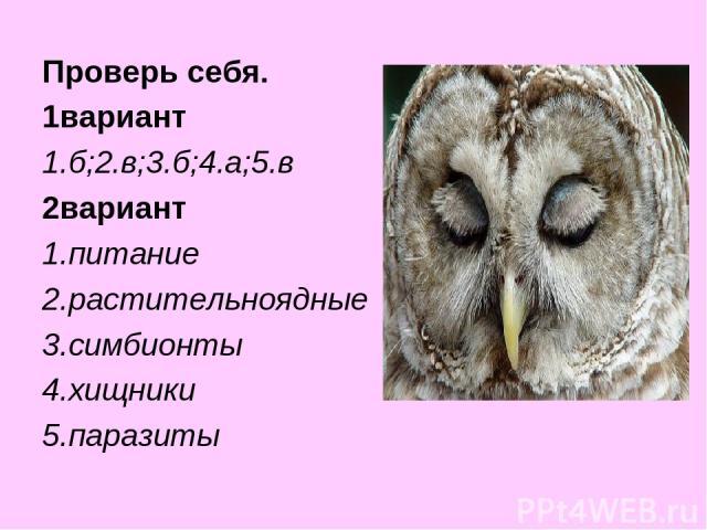 Проверь себя. 1вариант 1.б;2.в;3.б;4.а;5.в 2вариант 1.питание 2.растительноядные 3.симбионты 4.хищники 5.паразиты