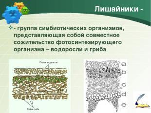 Лишайники - - группа симбиотических организмов, представляющая собой совместное