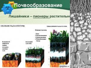Почвообразование Лишайники – пионеры растительности