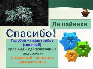 Голубой – гифы грибов (мицелий) Зеленый – одноклеточные водоросли Оранжевый – пи