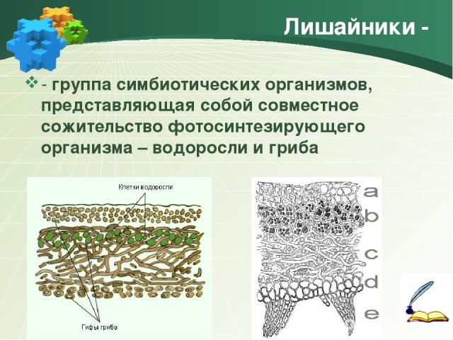 Лишайники - - группа симбиотических организмов, представляющая собой совместное сожительство фотосинтезирующего организма – водоросли и гриба