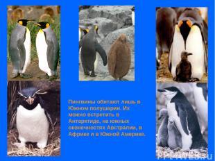 Пингвины обитают лишь в Южном полушарии. Их можно встретить в Антарктиде, на южн