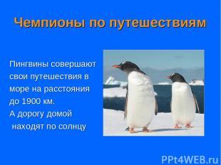 Чемпионы по путешествиям Пингвины совершают свои путешествия в море на расстояни