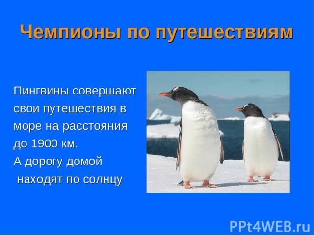 Чемпионы по путешествиям Пингвины совершают свои путешествия в море на расстояния до 1900 км. А дорогу домой находят по солнцу