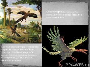 Уже имея крылья и перья, это животное сохранило, однако, и многие черты, присущи