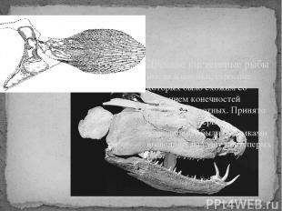 Древние кистеперые рыбы имели плавники, строение которых было схожим со строение