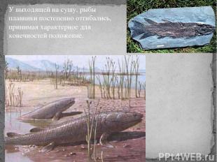У выходящей на сушу, рыбы плавники постепенно отгибались, принимая характерное д