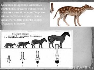 Конечности древних животных — возможных предков современной лошади и самой лошад