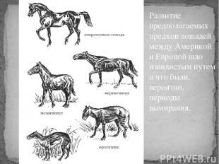 Развитие предполагаемых предков лошадей между Америкой и Европой шло извилистым
