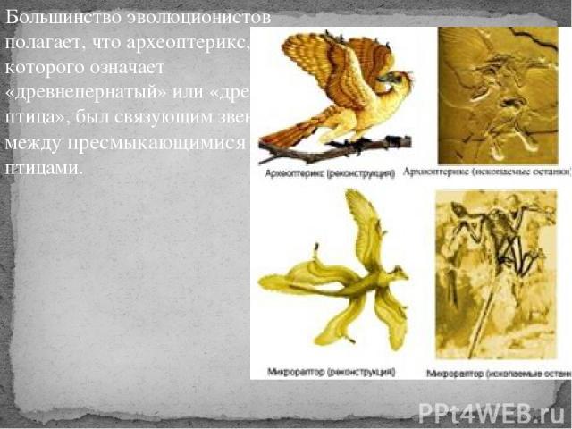Большинство эволюционистов полагает, что археоптерикс, имя которого означает «древнепернатый» или «древняя птица», был связующим звеном между пресмыкающимися и птицами. .