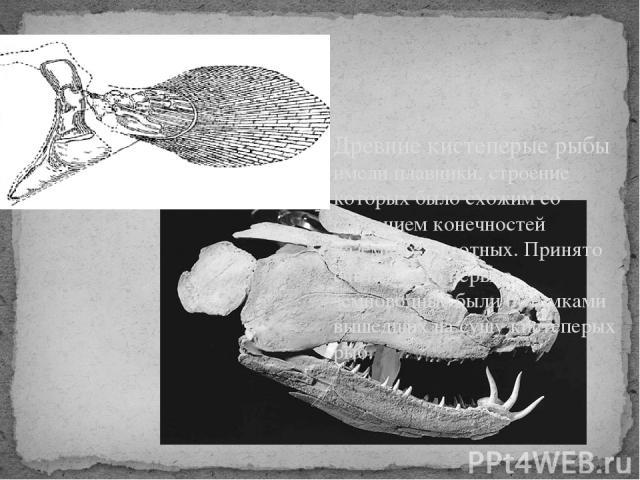 Древние кистеперые рыбы имели плавники, строение которых было схожим со строением конечностей наземных животных. Принято считать, что первые земноводные были потомками вышедших на сушу кистеперых рыб.