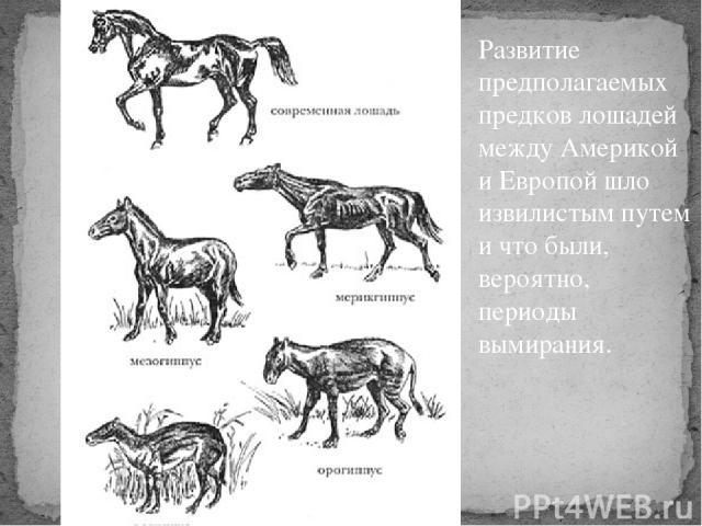 Развитие предполагаемых предков лошадей между Америкой и Европой шло извилистым путем и что были, вероятно, периоды вымирания.