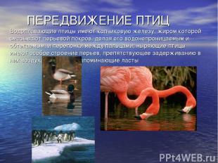 ПЕРЕДВИЖЕНИЕ ПТИЦ Водоплавающие птицы имеют копчиковую железу, жиром которой сма