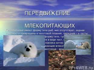 ПЕРЕДВИЖЕНИЕ МЛЕКОПИТАЮЩИХ Китообразные имеют форму тела рыб, мех отсутствует, з