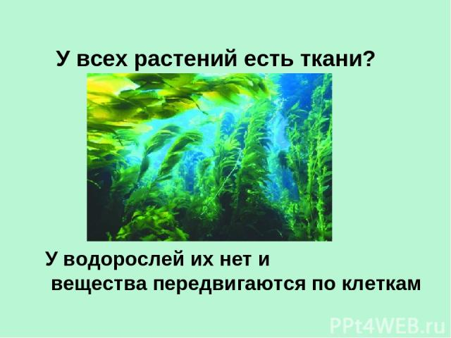 У всех растений есть ткани? У водорослей их нет и вещества передвигаются по клеткам