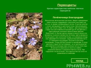 Первоцветы Печёночница благородная назад Краткая характеристика наиболее типичны