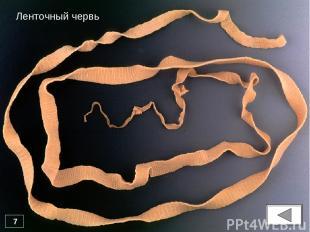 * Ленточный червь 7