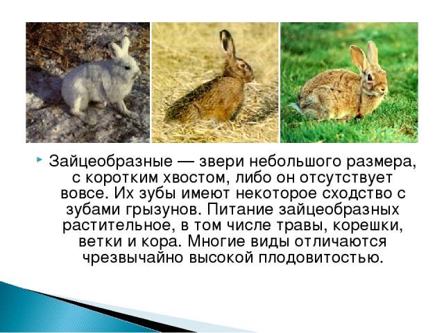 Зайцеобразные— звери небольшого размера, с коротким хвостом, либо он отсутствует вовсе. Их зубы имеют некоторое сходство с зубами грызунов. Питание зайцеобразных растительное, в том числе травы, корешки, ветки и кора. Многие виды отличаются чрезвыч…
