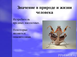 Значение в природе и жизни человека Истребитель вредных насекомых. Некоторые явл
