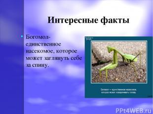 Интересные факты Богомол-единственное насекомое, которое может заглянуть себе за