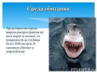 Представители отряда широко распространены во всех морях и океанах, от поверхнос
