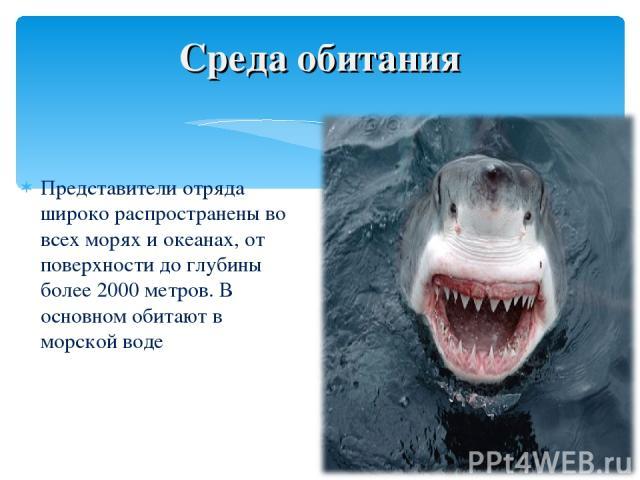 Представители отряда широко распространены во всех морях и океанах, от поверхности до глубины более 2000 метров. В основном обитают в морской воде Среда обитания