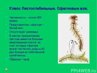 Класс Листостебельные. Сфагновые мхи. Численность – около 300 видов; Представите