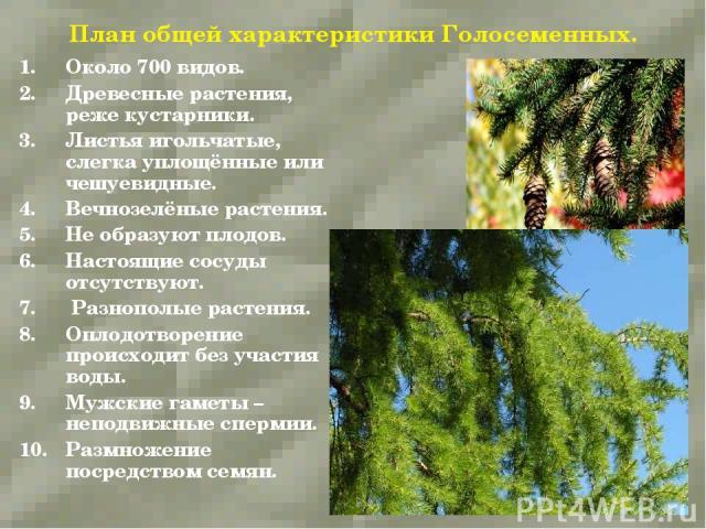 План общей характеристики Голосеменных. Около 700 видов. Древесные растения, реже кустарники. Листья игольчатые, слегка уплощённые или чешуевидные. Вечнозелёные растения. Не образуют плодов. Настоящие сосуды отсутствуют. Разнополые растения. Оплодот…
