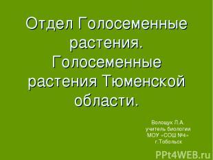 Отдел Голосеменные растения. Голосеменные растения Тюменской области. Волощук Л.