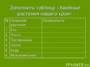 Заполнить таблицу «Хвойные растения нашего края»