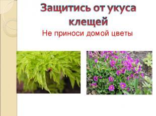 Не приноси домой цветы