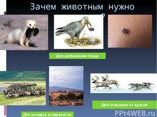 Зачем животным нужно движение? Для добывания пищи Для кочевок и перелетов Для сп
