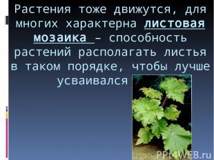 Растения тоже движутся, для многих характерна листовая мозаика – способность рас