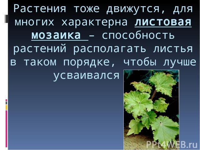 Растения тоже движутся, для многих характерна листовая мозаика – способность растений располагать листья в таком порядке, чтобы лучше усваивался свет