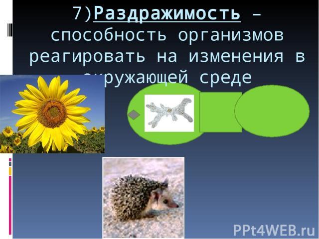 7)Раздражимость – способность организмов реагировать на изменения в окружающей среде