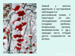 Зимой у многих деревьев и кустарников наблюдается рассеивание семян. У некоторых