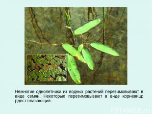 Немногие однолетники из водных растений перезимовывают в виде семян. Некоторые п