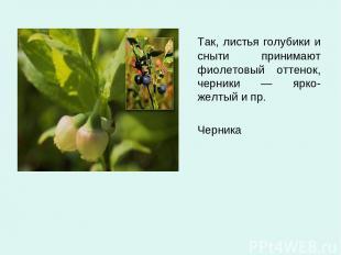 Так, листья голубики и сныти принимают фиолетовый оттенок, черники — ярко-желтый
