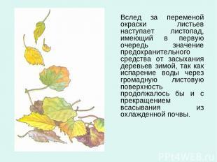 Вслед за переменой окраски листьев наступает листопад, имеющий в первую очередь