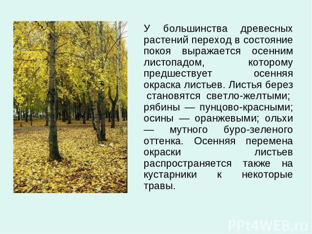 У большинства древесных растений переход в состояние покоя выражается осенним листопадом, которому предшествует осенняя окраска листьев. Листья берез становятся светло-желтыми; рябины — пунцово-красными; осины — оранжевыми; ольхи — мутного буро-зеле…