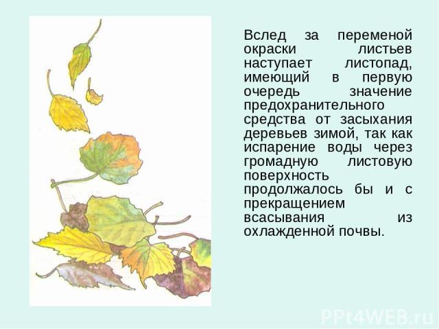Вслед за переменой окраски листьев наступает листопад, имеющий в первую очередь значение предохранительного средства от засыхания деревьев зимой, так как испарение воды через громадную листовую поверхность продолжалось бы и с прекращением всасывания…