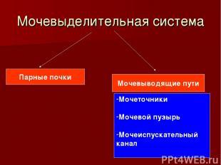 Мочевыделительная система Парные почки Мочевыводящие пути Мочеточники Мочевой пу