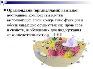 Органоидами (органеллами) называют постоянные компоненты клетки, выполняющие в н
